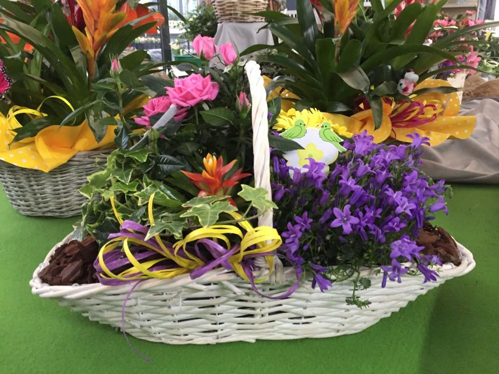 Piante da interno - acquista su Lovisetto Garden